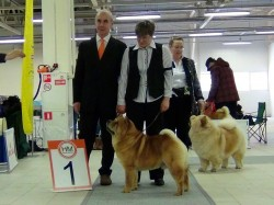 CACIB dog show Baltic Triumph 2013