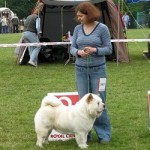 Liren chow-chow kennel