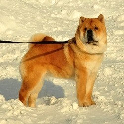 Regional dog show in Kirov, 25.02.2012