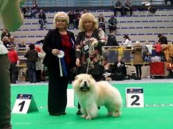 Le-Pash Emrys- Estonian Champion