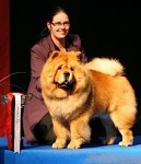 Vorondil chow-chow kennel